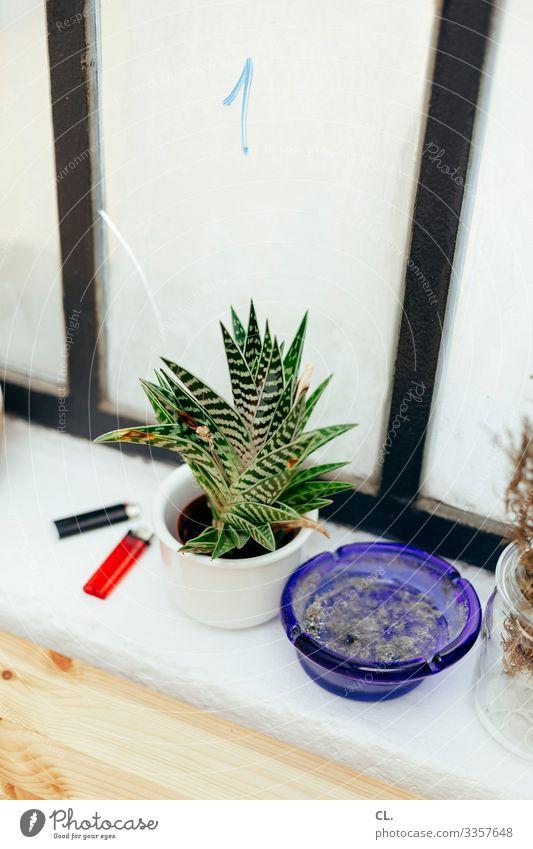 am fenster Häusliches Leben Wohnung Dekoration & Verzierung Pflanze Fenster Feuerzeug Aschenbecher Ziffern & Zahlen ästhetisch authentisch Rauchen