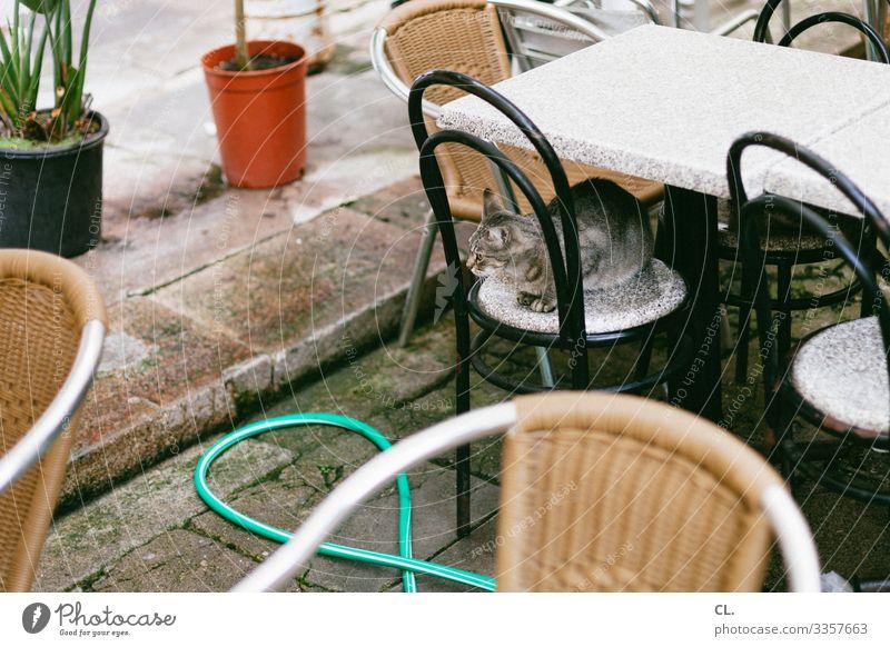 katze Möbel Stuhl Tisch Tier Haustier Katze 1 Schlauch Blumentopf beobachten sitzen authentisch Café Restaurant Farbfoto Außenaufnahme Menschenleer Tag