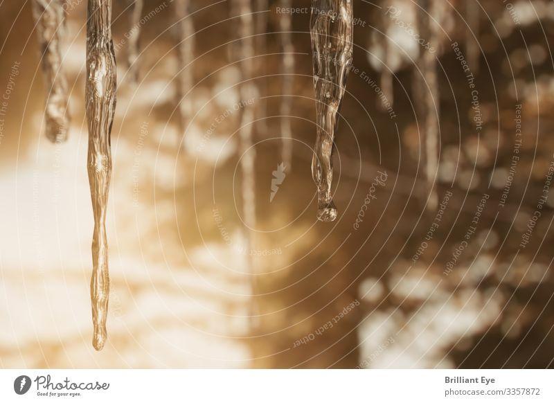 Eiszapfen Natur Wald Winter Wärme kalt natürlich oben glänzend ästhetisch einfach viele Frost nah Tiefenschärfe