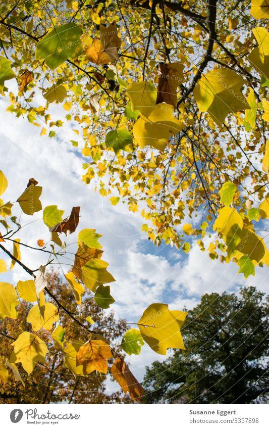 sonniger Herbst Natur Pflanze Himmel Schönes Wetter Baum Garten Park Wald Erholung träumen natürlich blau braun gelb Freiheit Freizeit & Hobby Idylle