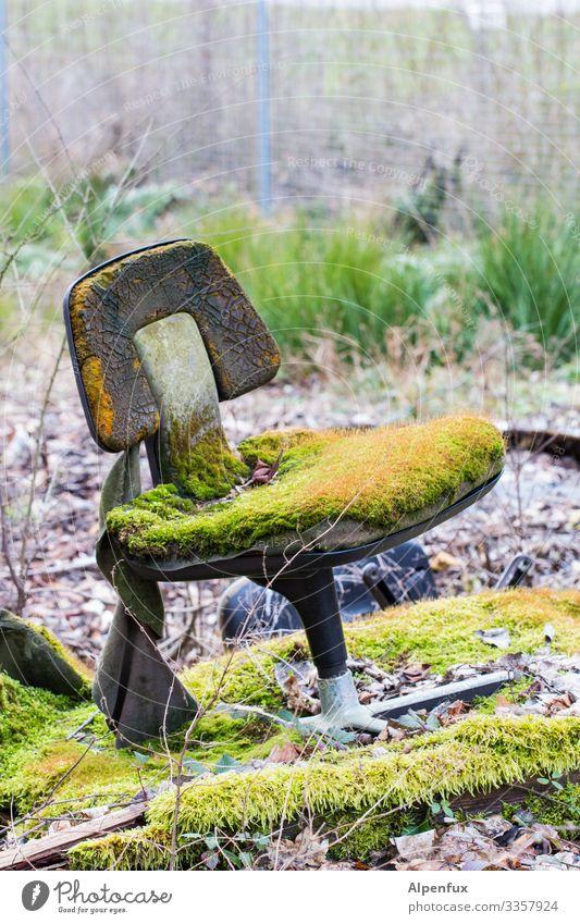 Setzen !! bäh! Wald Moos Außenaufnahme Natur Pflanze Menschenleer Pilz Farbfoto grün Waldboden natürlich Landschaft Stuhl Bürostuhl Schreibtischstuhl Umwelt