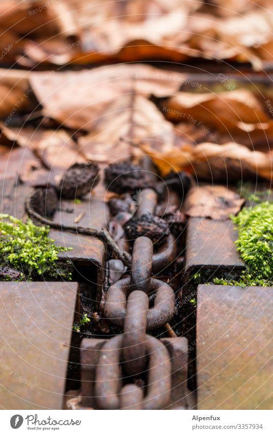 Natur in Ketten Blätter Blatt Herbst Farbfoto Menschenleer grün Außenaufnahme Tag Jahreszeiten mehrfarbig Nahaufnahme Moos Vergänglichkeit Detailaufnahme Wald