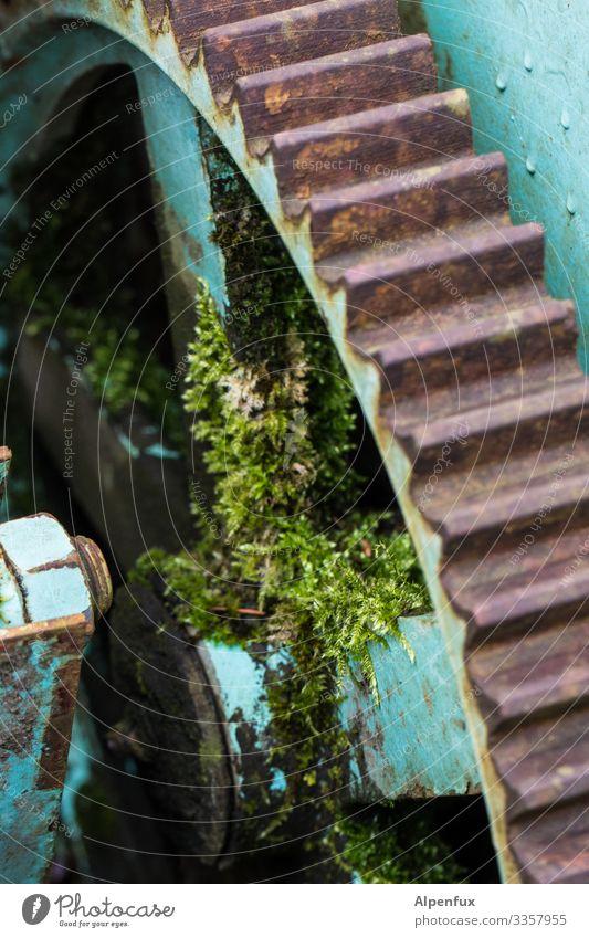 lange Pause Zahnrad Moos alt Rost Maschine kaputt Detailaufnahme Nahaufnahme Getriebe drehen Stahl Außenaufnahme Farbfoto Technik & Technologie Metall Mechanik