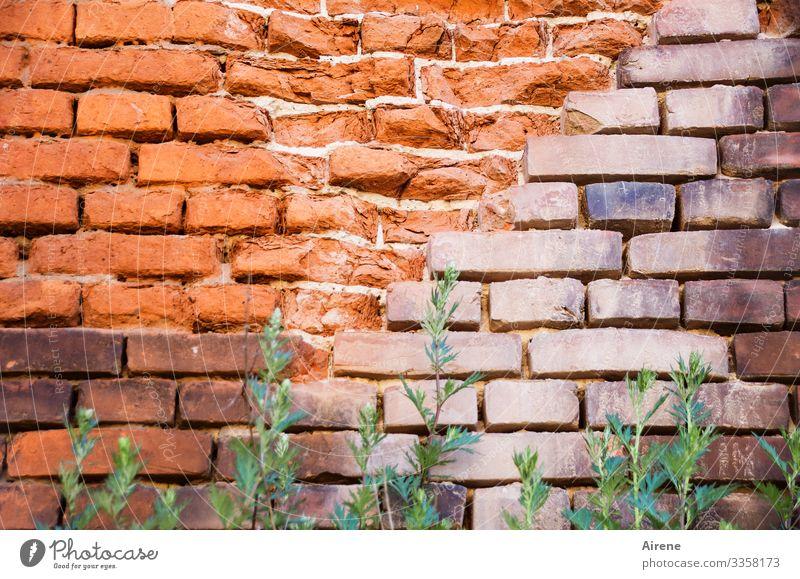 Blockade Mauer mauerwerk Ziegelbauweise ziegelrot hoch Sperre begrünen Unkraut grünzeug Grasbüschel Backsteinwand Backsteine schräg Farbton alt kaputt