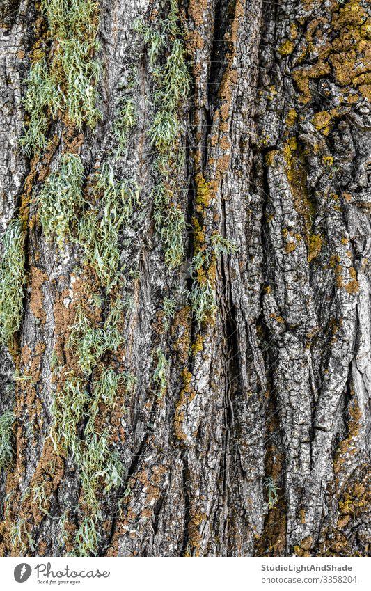Moschusartige Baumrinde schön Natur Moos Wald Holz alt natürlich grün Farbe Rinde Hintergrund Konsistenz texturiert moosbedeckt Riss farbenfroh bunt