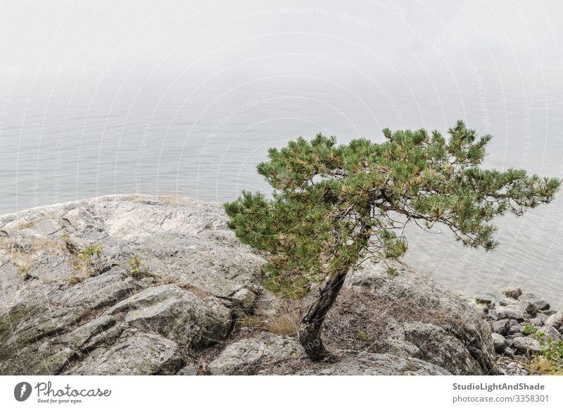 Kiefer an einem ruhigen Seeufer schön Sommer Meer Natur Landschaft Wolken Baum Felsen Küste Stein blau grün weiß Farbe Wasser nadelhaltig Beautyfotografie
