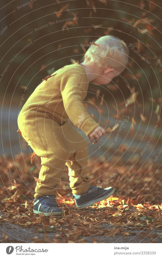 Herbstfreude Kindererziehung Bildung Kindergarten lernen Mensch Kleinkind Junge Leben 1 1-3 Jahre 3-8 Jahre Kindheit Umwelt Natur Blatt Garten Park entdecken