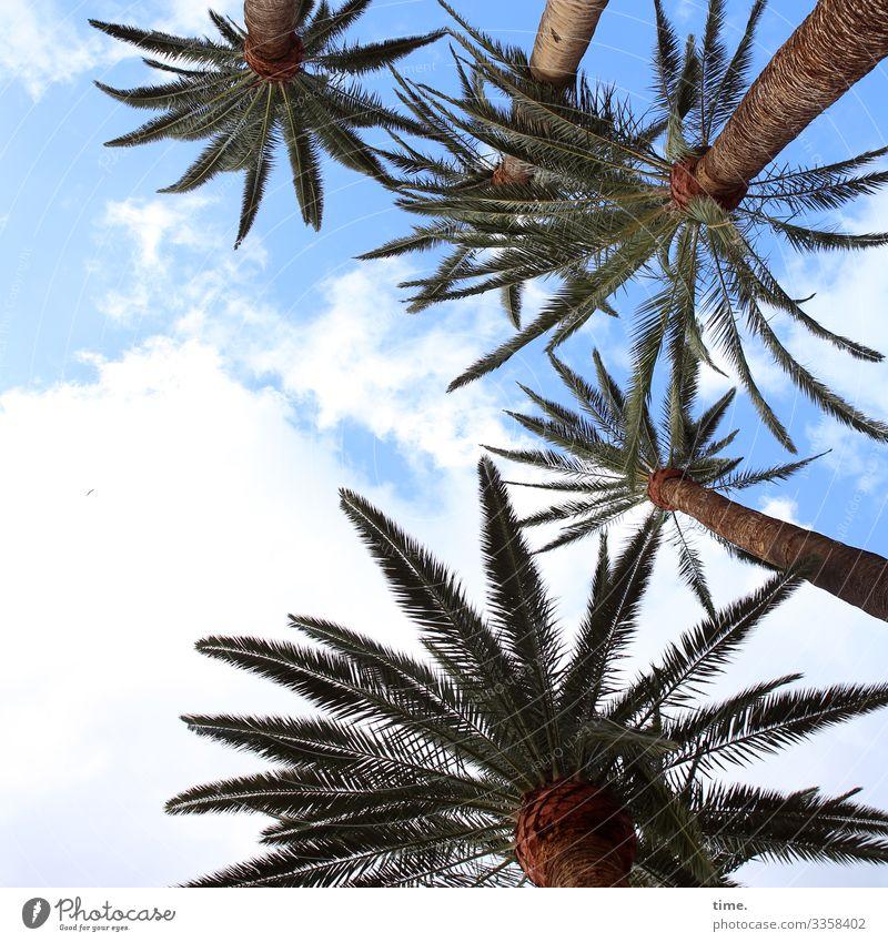 Gomeraner Palmen-Gang bedrohlich ausruhen pause reisen urlaub luftig frisch gegenlicht gemeinsam zusammen zweige schutz inspiration perspektive kraft himmel