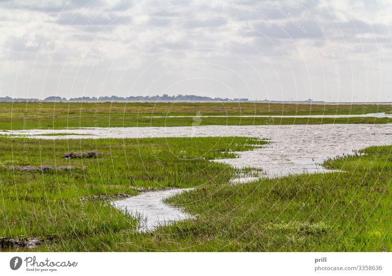 coastal scenery in Eastern Frisia Meer Pflanze Wasser Küste Nordsee authentisch Ostfriesland norddeutschland Ebbe Schlick Schlamm bewachsen ufer wittmund