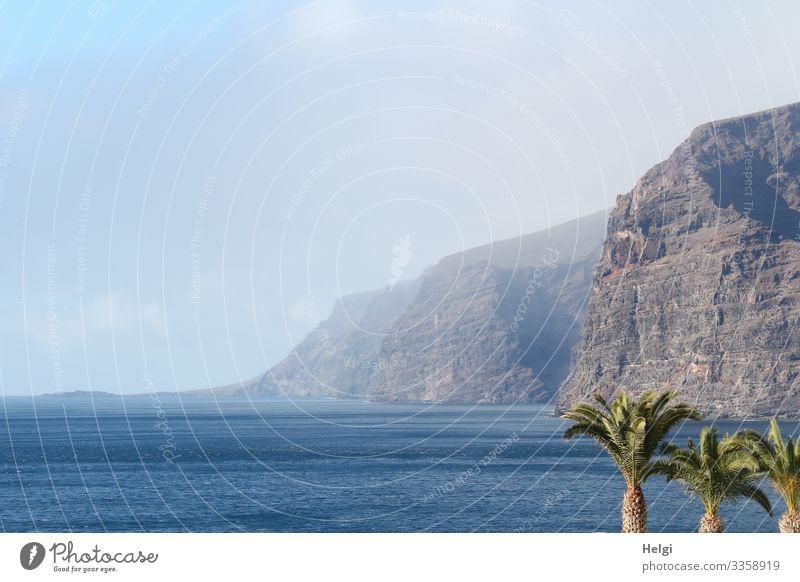 """Die Steilküste """"Los Gigantes"""" ragt  auf Teneriffa aus dem Meer , drei Palmen stehen im Vordergrund Ferien & Urlaub & Reisen Tourismus Umwelt Natur Landschaft"""
