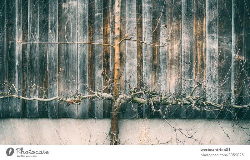 Abstrakter wachsender Baum ruhig Natur Pflanze Architektur alt Wachstum Steinwand Außenseite tote Pflanze Anlagenteil Wurzel Schönheit in der Natur