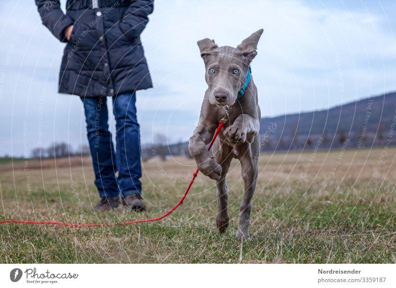 Energiebündel Spielen Jagd Ausflug wandern Mensch Frau Erwachsene Natur Landschaft Frühling Gras Wiese Tier Haustier Hund rennen Fröhlichkeit Neugier Tierliebe