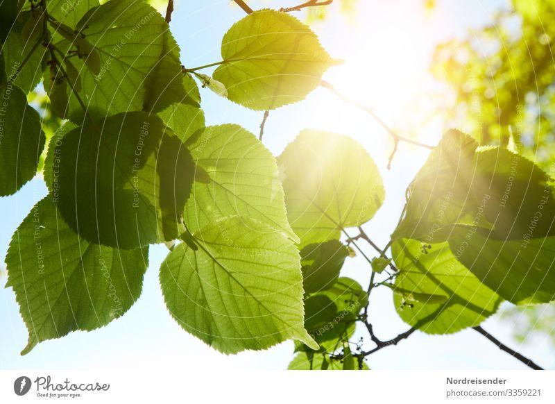Frisches Grün Leben harmonisch Duft Ausflug Natur Wolkenloser Himmel Sonnenlicht Frühling Sommer Schönes Wetter Baum Blatt Park Wald leuchten Wachstum frisch