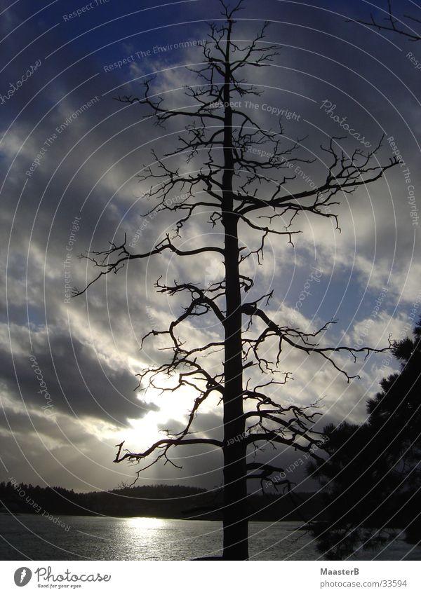 Twilight Zone Sonne Natur Landschaft Wolken schlechtes Wetter Baum Fjord Norwegen bedrohlich dunkel trist Endzeitstimmung Geäst Baumskelett Baumgerippe