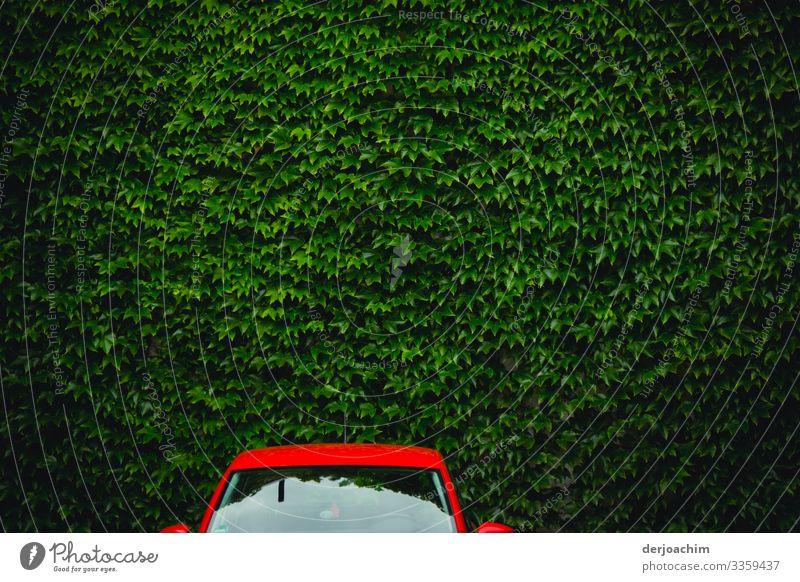 Rotes Auto an grüner Wand. Der obere Teil eines Roten Autos vor einer Grünen Blätterwand. Design harmonisch Ausflug PKW Umwelt Sommer Schönes Wetter Grünpflanze