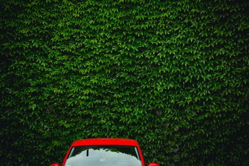 Rotes Auto an grüner Wand Design harmonisch Ausflug PKW Umwelt Sommer Schönes Wetter Grünpflanze Garten Erlangen Bayern Deutschland Stadt Metall beobachten