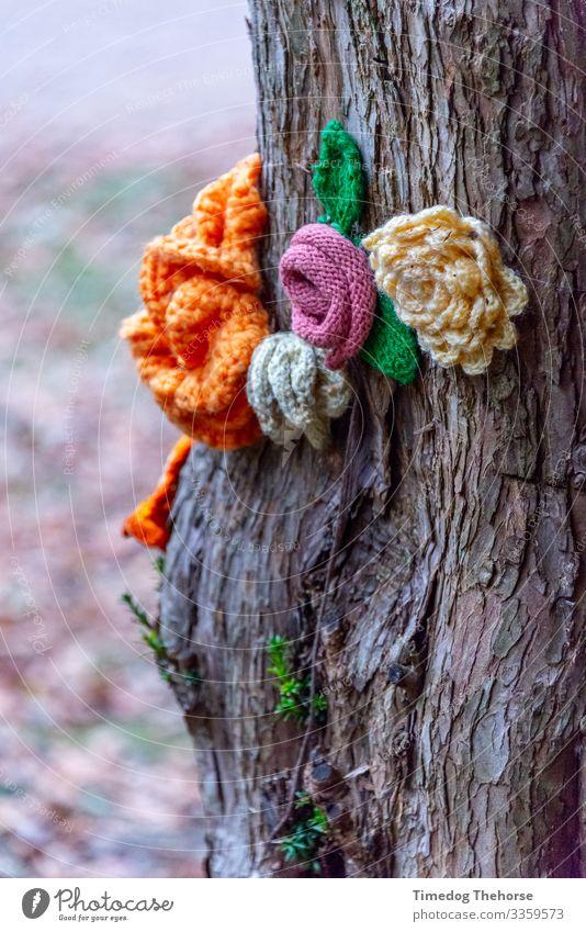 Gestrickte Blume Erholung stricken Dekoration & Verzierung Pflanze Baum Blüte Stoff Liebe Wachstum weich Frieden Rinde Überstrahlung Botanik Kinderblume