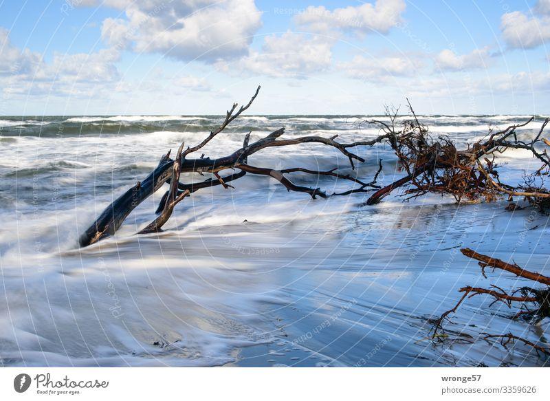 Stürmische Ostsee Natur Landschaft Urelemente Luft Wasser Himmel Wolken Herbst Unwetter Wind Sturm Baum Wellen Küste Strand bedrohlich nass blau braun türkis