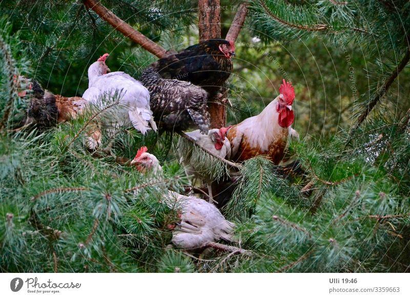 Bei DREI alle auf´m Baum! Sommer grün weiß rot schwarz Garten Zusammensein braun sitzen Tiergruppe authentisch Flügel beobachten bedrohlich Neugier