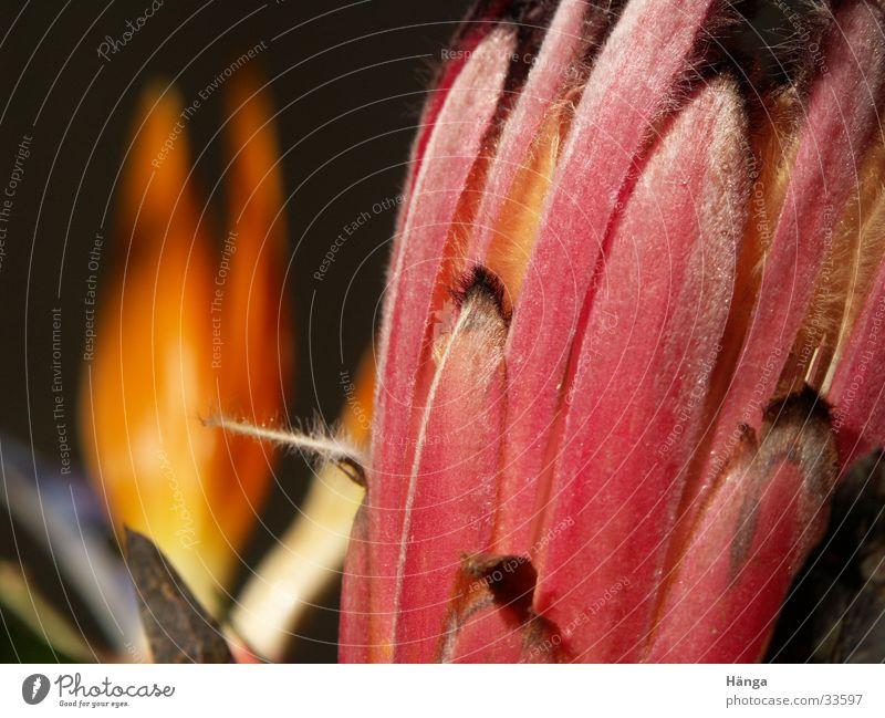 Flava4Flower Natur schön Blume exotisch