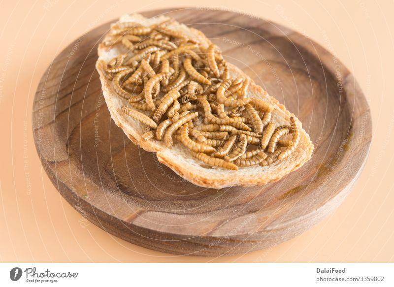 Endibler Wurm mit Brot im gewachsenen Hintergrund Diät brauner Hintergrund essbar braten Insekt Larve Protein Belegtes Brot Holzplatte Vorderansicht