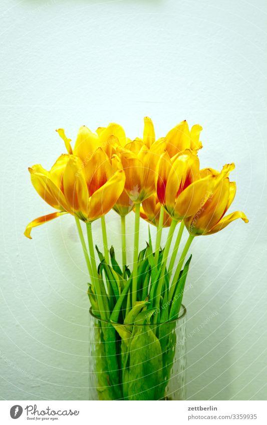 Tulpenstrauß Blume Blühend Blüte Blütenblatt Stengel Garten Menschenleer Natur Pflanze ruhig Textfreiraum Blumenstrauß Frühling Frühlingsblume Frühblüher gelb