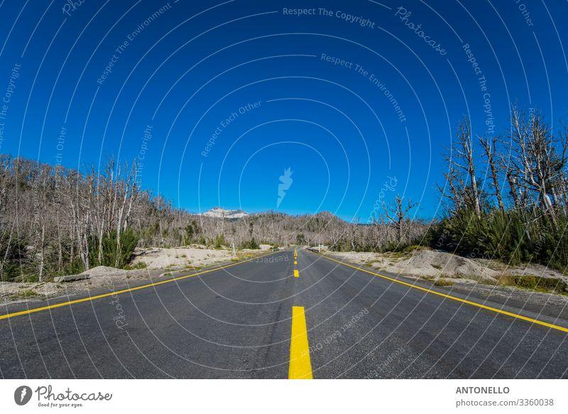 Straße durch den toten Wald in der Nähe des Vulkans Puyehue Ferien & Urlaub & Reisen Tourismus Abenteuer Ferne Sommer Umwelt Natur Landschaft Erde Himmel