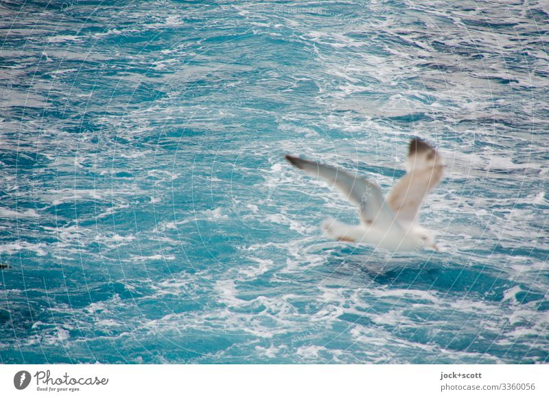 abgehoben und losgelöst Ferien & Urlaub & Reisen Wasser Meer Tier fliegen Möwe Ägäis