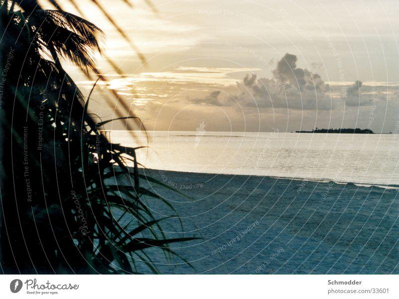 Strand Malediven Sonnenuntergang Meer Palme Wasser Insel