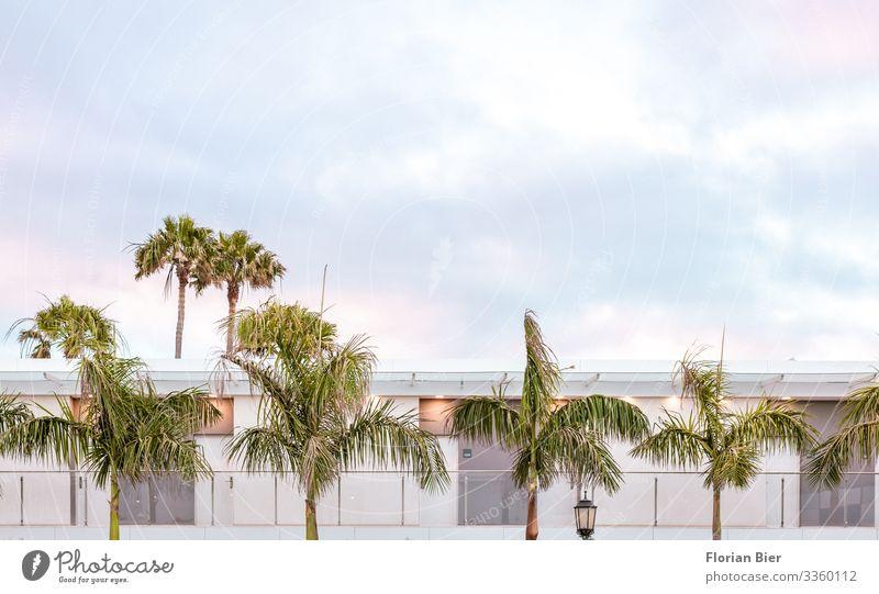 Vanilla Sky Himmel Wolken Sonnenaufgang Sonnenuntergang Palme Menschenleer Haus Traumhaus Architektur Fassade Balkon Fenster Tür Häusliches Leben ästhetisch