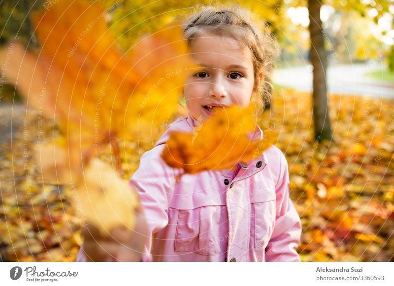 Süßes kleines Mädchen mit fehlenden Zähnen, das mit gelbem Laub im Herbstwald spielt. Zeigt der Kamera das Blatt. Glückliches Kind, das lacht und lächelt. Sonniger Herbstwald, Sonnenstrahl.