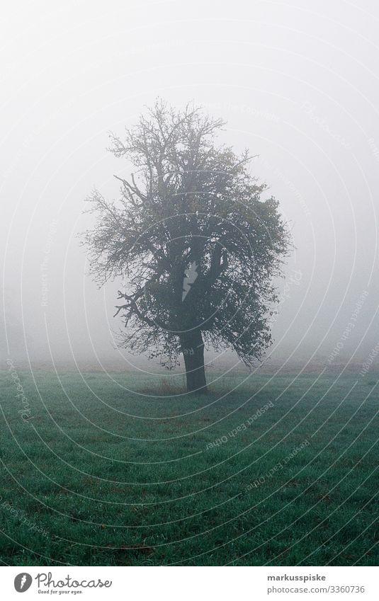 Nebliger Morgenbaum analoge Fotografie 35mm Filmfotografie Filmscan Scan Leica R7 natürlich neblig Nebel Baum Wiese Gras Ast Baumstamm im Freien Natur