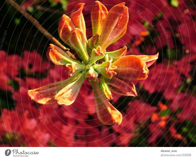 Blüte Blume Pflanze Natur