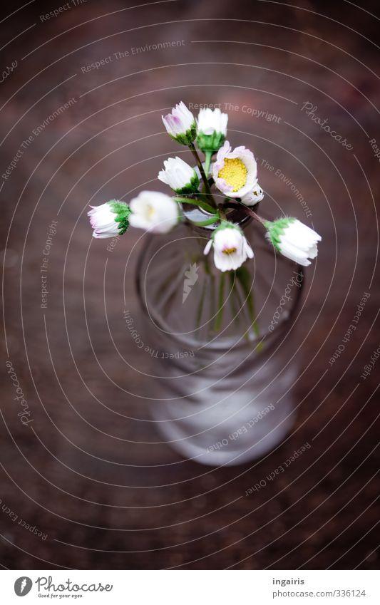 Ein bisschen Frühling Dekoration & Verzierung Pflanze Blume Gänseblümchen Flaschenhals Vase Holz Blühend schön klein nah natürlich braun gelb grau weiß Stimmung