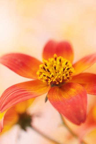 fein gemacht Natur Pflanze Frühling Sommer Herbst Blume braun gelb gold grün orange rot Außenaufnahme Innenaufnahme Nahaufnahme Makroaufnahme Textfreiraum oben