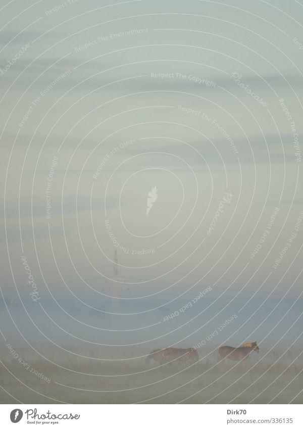 Drei Pferde im Morgennebel Reiten Energiewirtschaft Strommast Umwelt Natur Himmel Wolken Herbst Schönes Wetter Nebel Wiese Feld Weide Tier Haustier Nutztier 3