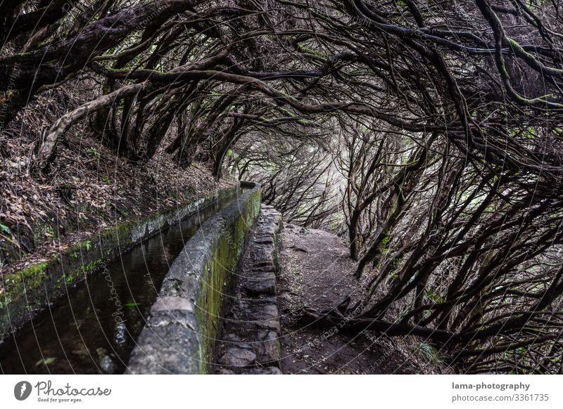 Levada - Wilder Weg Wege & Pfade zugewuchert wild Äste und Zweige Baum Kanal Madeira Wanderung Wasser Wasserversorgung mystisch Märchenwald Reise Tourismus
