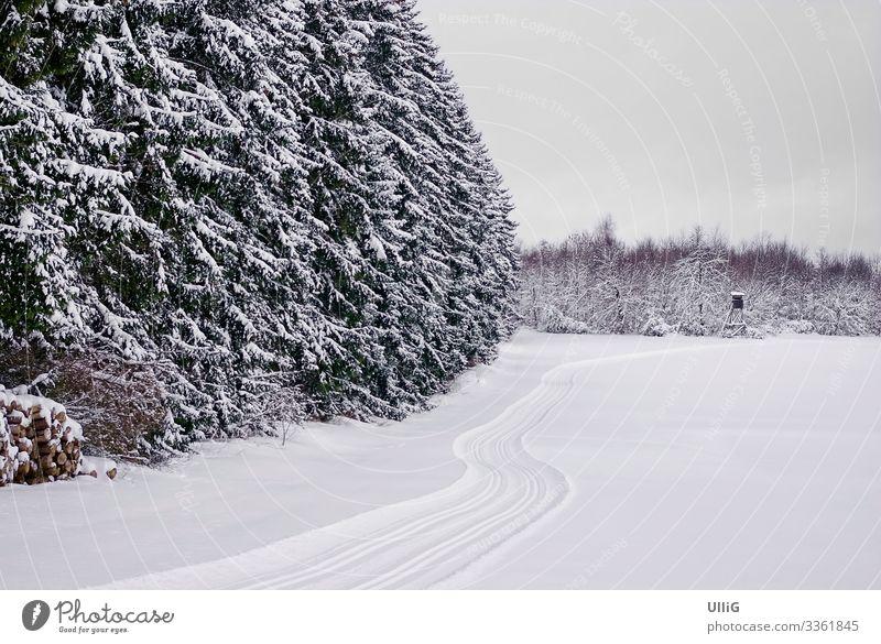 Verschneiter Winterwald und offenes Feld mit Loipe. Wald Schnee verschneit Landschaft Natur Spuren Skilanglauf Skifahren Wintersport Weihnachten & Advent