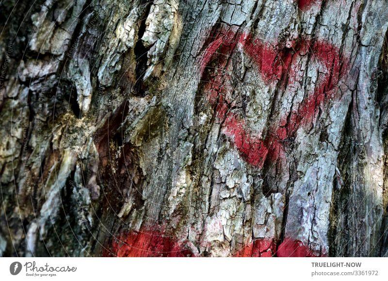 Alte Liebe rostet nicht Natur Pflanze Landschaft rot Baum Erholung ruhig Freude Graffiti Umwelt Senior Glück Ausflug Design Freizeit & Hobby