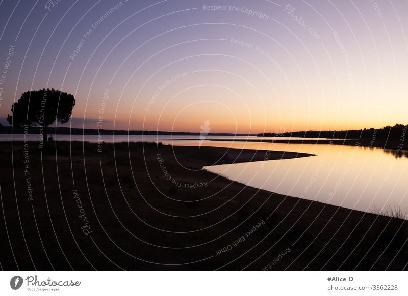 Pinienbaum silhouette am see bei Sonnenuntergang Ferien & Urlaub & Reisen Strand Umwelt Natur Landschaft Sand Wolkenloser Himmel Sonnenaufgang Baum Park