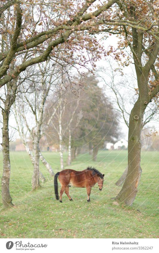 Pferd in einer Traumwelt Natur schön grün Landschaft Baum Tier Leben Umwelt Wiese Gefühle Glück braun Stimmung träumen Nebel Feld