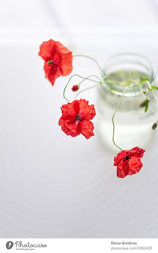 Roter Mohn in einer schlichten Glasvase. Blumenstillleben. Sommer Pflanze Blüte Blumenstrauß Wasser ästhetisch dünn einfach elegant hell rot Farbfoto