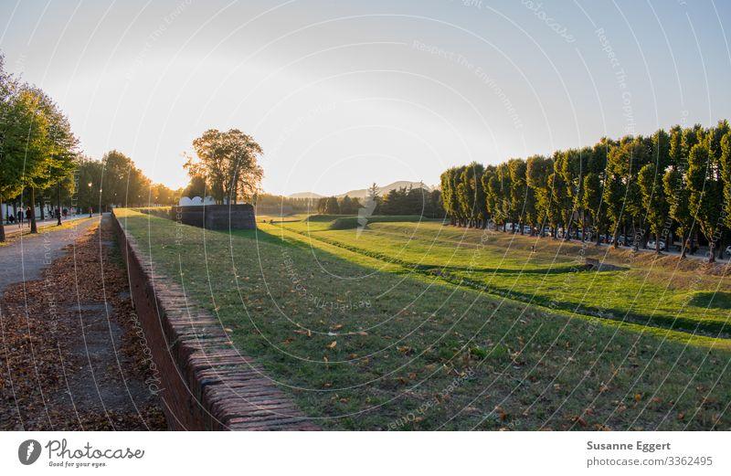 Stadtmauer Lucca Natur Landschaft Pflanze Sonnenaufgang Sonnenuntergang Schönes Wetter Vergänglichkeit Abenddämmerung Spaziergang Wege & Pfade Spazierweg