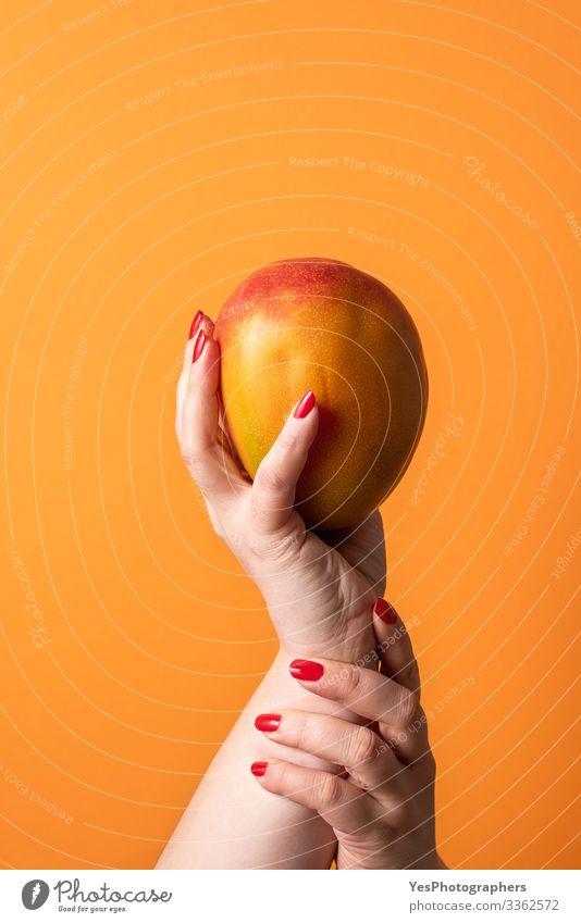 Hände, die eine reife Mango halten. Frische tropische Früchte Frucht Dessert Bioprodukte Gesunde Ernährung Hand feminin schätzen farbenfroh Diätnahrung