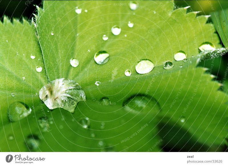 drops Blatt grün Wassertropfen Makroaufnahme