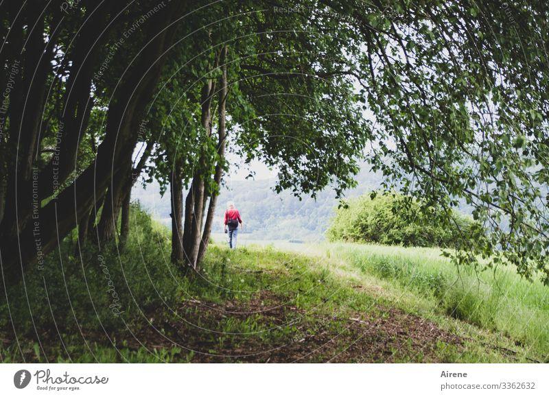 Ich ging im Walde so für mich hin... Erwachsene 1 Mensch Natur Schönes Wetter blond wandern Spaziergang Spazierweg Fußweg Wege & Pfade Waldrand Waldlichtung
