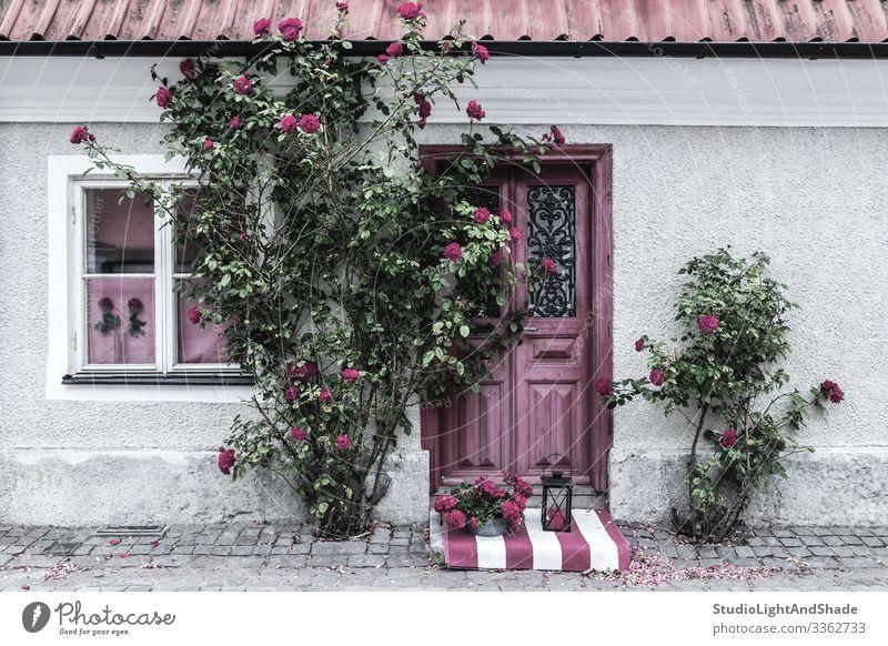 Malerischer, mit Rosen geschmückter Hauseingang schön Sommer Garten Gartenarbeit Blume Dorf Stadt Gebäude Architektur Fassade Straße Stein alt grün rosa rot
