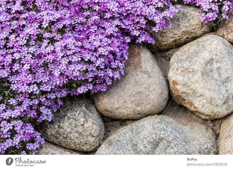 Frühlingsblumen an einer Gartenmauer. Lifestyle Stil Design Wellness Erholung Freizeit & Hobby heimwerken Gartenarbeit Umwelt Natur Landschaft Pflanze Wetter