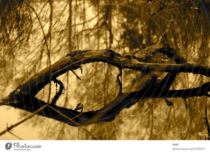 wood_two Wasser Baum Tod Ast Weißabgleich