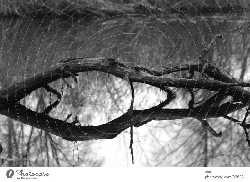 wood_one Wasser Baum Tod Ast